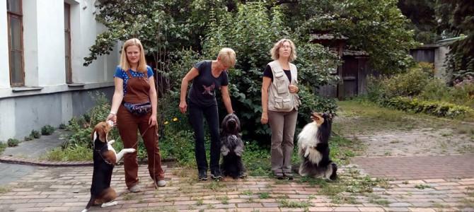 Дрессировочная площадка для собак на Подоле (м. Контрактовая Площадь)
