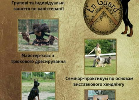 семинар по трюковой дрессировке, семинар по танцам с собаками, Мельничук Елена, Гончар Елена