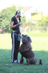 семинар по трюковой дрессировке, dogdacing seminar ukraine
