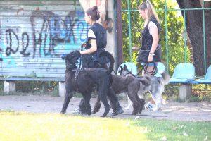 семинар дрессировка Черновцы, дрессировка собак, семинар танцы с собакой